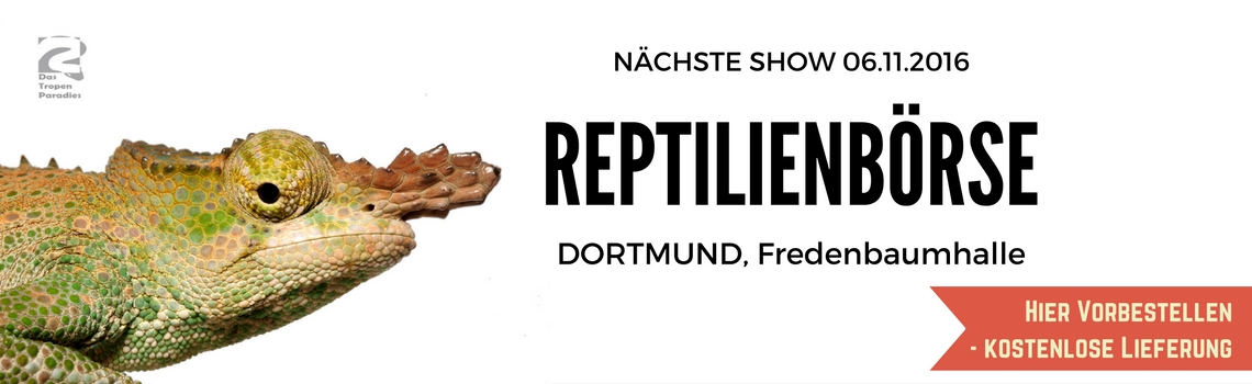 Show-Dortmund3