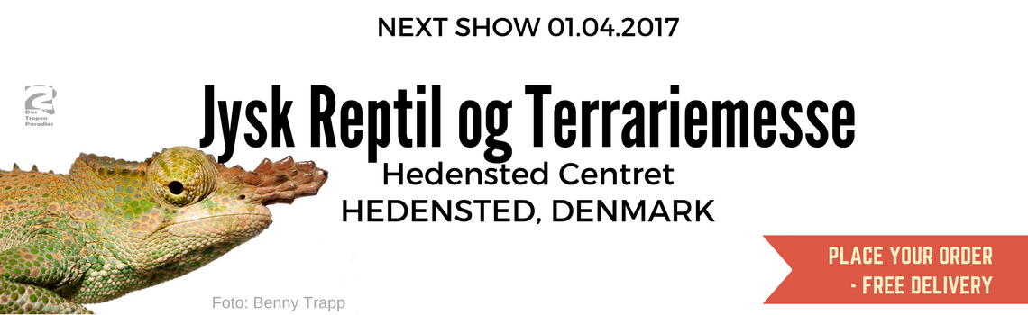Hedensted-Denmark-Show
