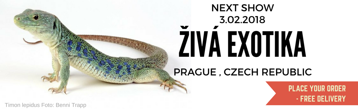Prag-Show